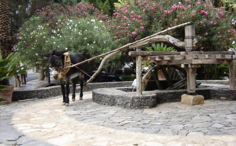 burro dando vueltas atado a un molino